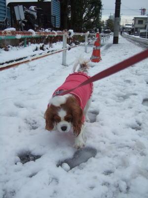 2011.2.14 雪 9