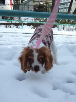 2011.2.14 雪 17