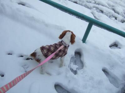 2011.2.14 雪 14