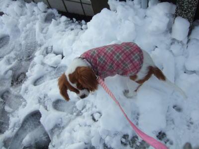 2011.2.14 雪 13