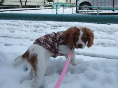 2011.2.14 雪 19