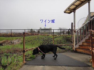 b2011 05 02_7141