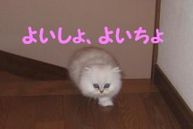 IMG_1832.jpg