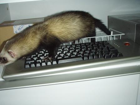 キーボード押してあげるわ!