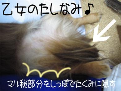tashinami.jpg