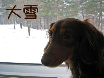 yuki_20071123135519.jpg