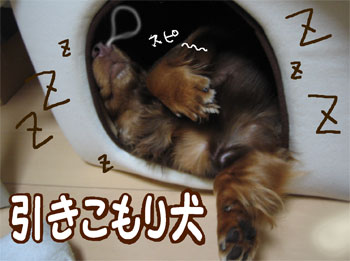 zubo4.jpg