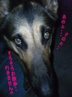 maron_yoru.jpg