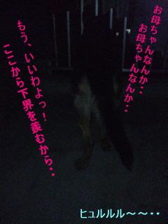 maron_yoru2.jpg