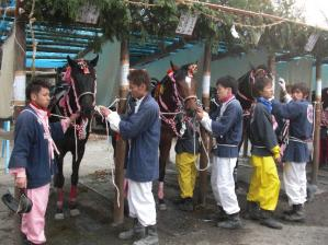 馬は着飾っています