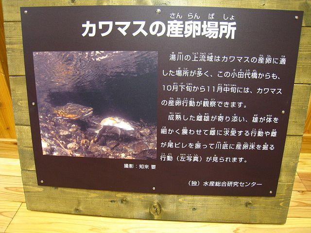 2011.10.1湯川 (66)
