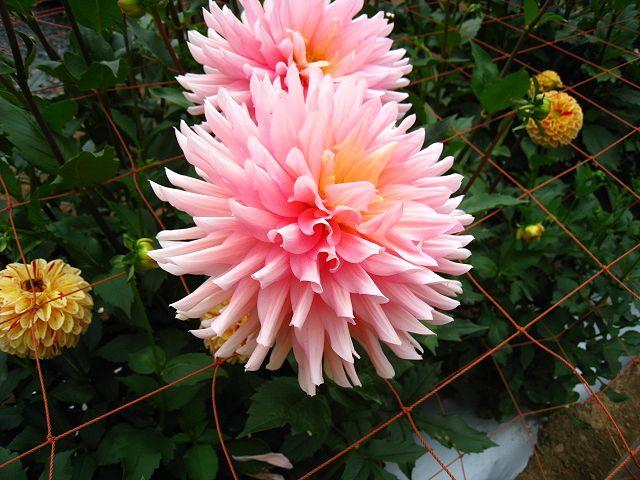 2011.10.9両神山 (60)