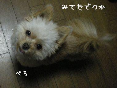 アイドル研修生