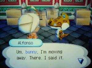 アルベルト引越し