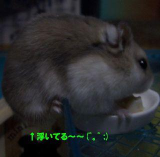 浮いてる~~(*≧m≦*)