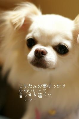 200910こゆたん♪ (28)