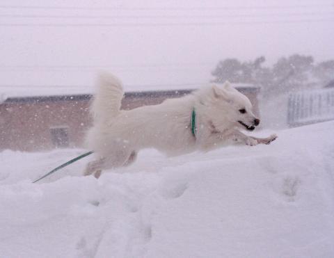 """吹雪だよ~~~(@_@;)"""""""