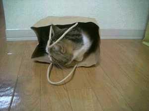 めろん袋1