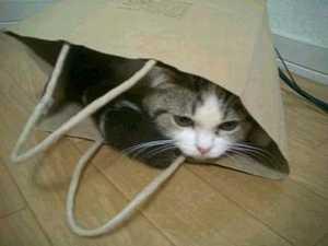 めろん袋3