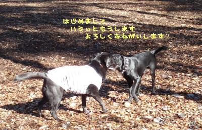 20071114180638.jpg