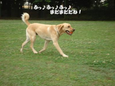 DSC04352.jpg