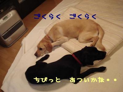 DSC09139.jpg