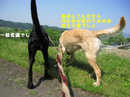 IMG_3304_20110519170318.jpg