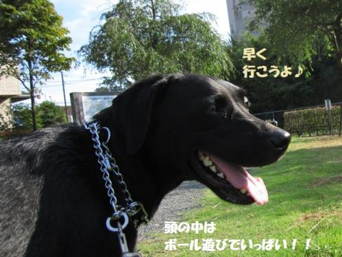 IMG_4006_20110919223739.jpg