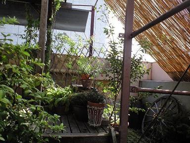 ガーデンカフェ1