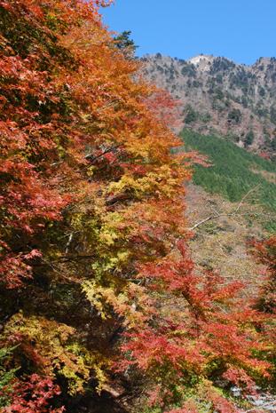 梅が島の紅葉