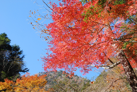 梅が島の紅葉2
