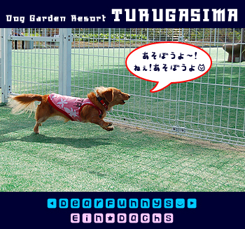 DogGardenResortT2e.jpg