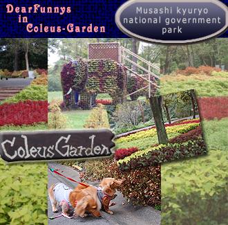 coleus-garden.jpg