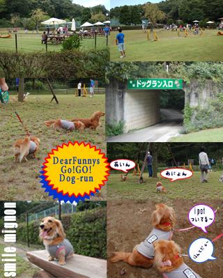 dogrun_20071011211940.jpg