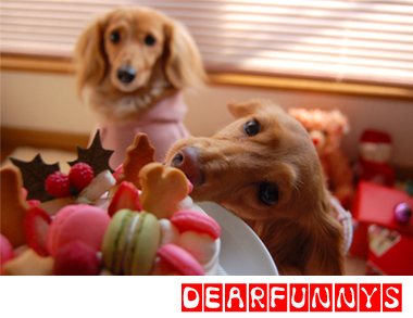 eat_eatME.jpg
