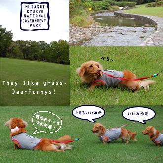 the-grass.jpg