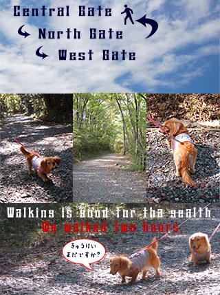 walking.jpg