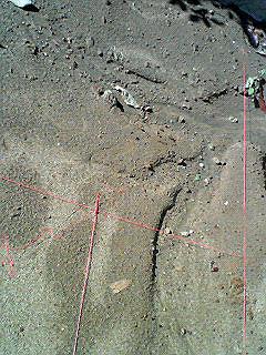 20071028土地にピンクの糸