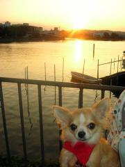 金沢八景で夕焼けを見たよ
