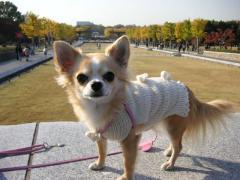 昭和記念公園でお相撲を取ったよ!