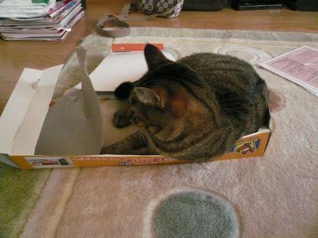箱が好き01