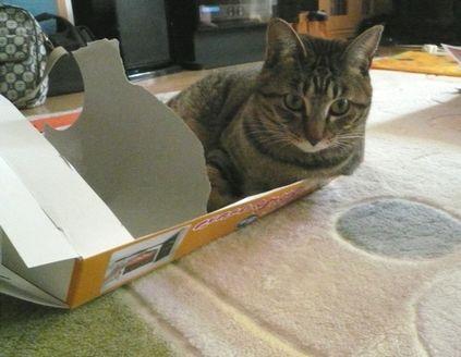 箱が好き03