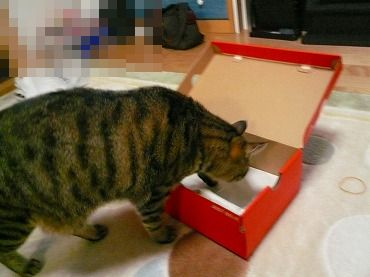 箱や 箱P1070323