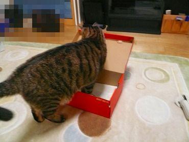 箱や 箱P1070325