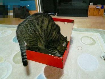 箱や 箱P1070326
