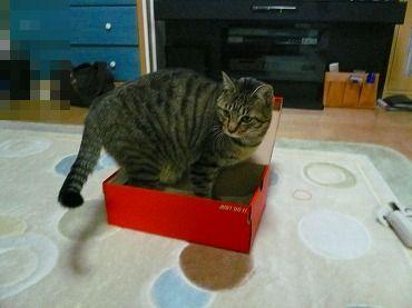 箱や 箱P1070329