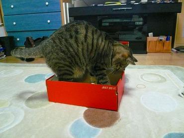 箱や 箱P1070330