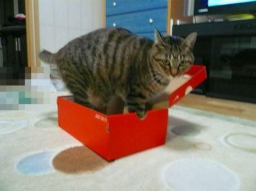 箱や 箱P1070331