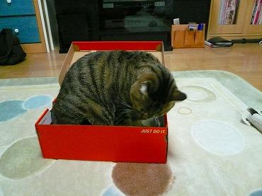 箱や 箱P1070332