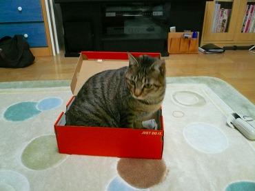 箱や 箱P1070333